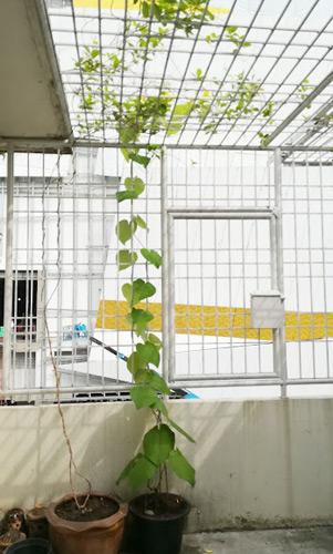 バンコク プティホステルの植物