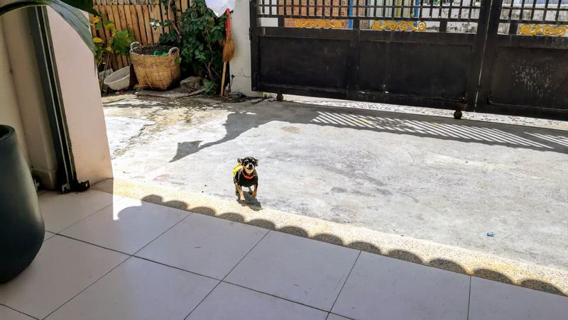 遊んでくれる小さな犬