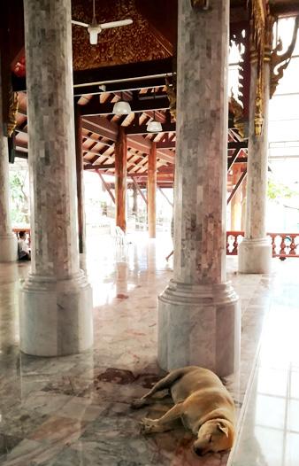 寺で寝る犬