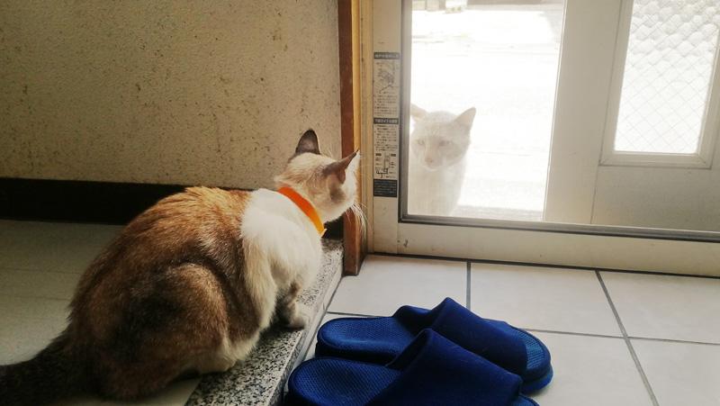 猫のお客さんのご対応